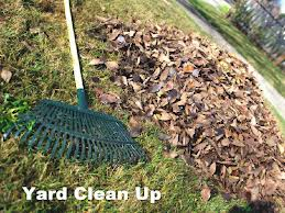 yardcleanup